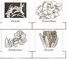 Malvorlagen Urwald Name Malvorlagen Edelwei 223 Kostenlos Coloring And Malvorlagan
