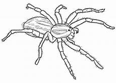 carolina wolf spider coloring page free printable