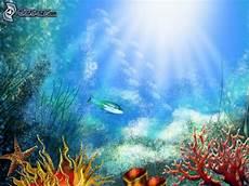 lade acquario marino korallen
