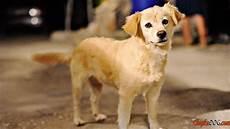 hunderassen mit bild mittlere hunderassen mit bild puppy wallpaper