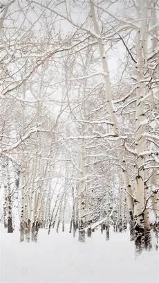 iphone wallpaper winter trees birch trees winter landscape iphone 6 plus hd wallpaper