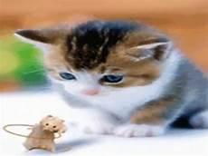 Foto Kucing Lucu Bergerak