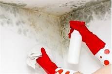 waschmittel gegen schimmel tipps zur entfernung schimmel in der wohnung jane65