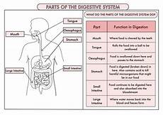 science worksheets year 4 12476 science poster pack on the digestive system and teeth for year 4 teaching resources
