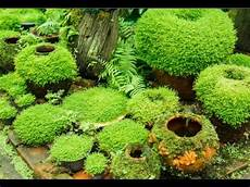 indooroutdoor hanging moss balls filled with plants diy hanging kokedama japanese moss balls plant tutorial