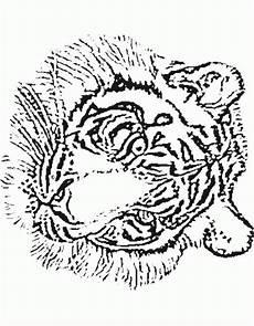 Malvorlagen Tiger Tiger Malvorlagen Malvorlagen1001 De