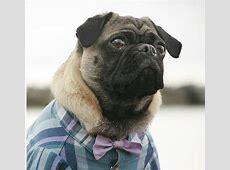 Dog Wedding Bow Tie (dog shirt sold separately)   Wedding