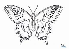 Ausmalbild Schmetterling Wiese Ausmalvorlage Schmetterling Nabu Kingkalli