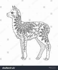 baby alpaca llama for coloring page
