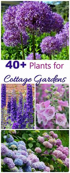 Best Plants For Cottage Garden