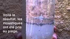 piege à moustique naturel pi 232 ge 224 moustique 233 cologique