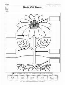 kinds of plants worksheets for kindergarten 13653 parts of plants worksheets click here parts of a plant pdf to the document stuff