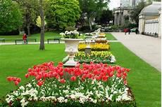 Paling Populer 28 Gambar Bunga Tulip Di Taman Koleksi