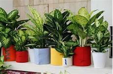a chaque int 233 rieur sa plante verte d 233 co maison