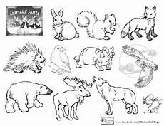 rainforest animals coloring pages preschool 17131 preschool hibernation coloring sheet coloring pages forest coloring book animal coloring