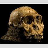 neanderthal-footprints