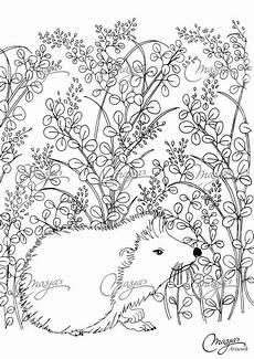 Igel Ausmalbild Erwachsene Masja S Hedgehog Coloring Page Ausmalbilder
