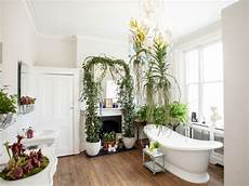 Bathroom Ideas Plants by Houseplants That Thrive In Your Bathroom Best Bathroom