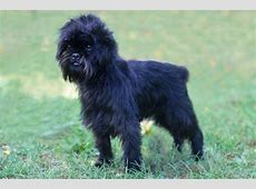 Dog Breeds of the World: Breeds from A to Z   Pawstruck Press