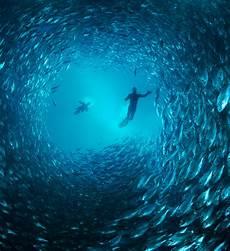 Learning By Doing Pemandangan Bawah Laut