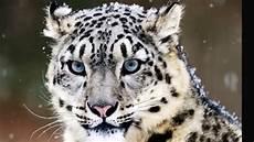 sedere piu bello al mondo i 10 animali pi 249 belli al mondo