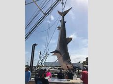 record tiger shark texas