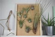 Wanddekoration Mit Luftpflanzen Diy Ideen Mit