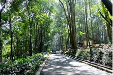 10 Gambar Taman Hutan Raya Juanda Bandung Dago Tiket