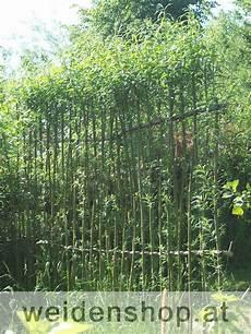 sichtschutzzaun weide living willow fence weidenzaun