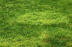 poa annua bekämpfen coarse grasses in lawns rhs gardening