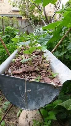ce dans mon jardin les balades de lison mon jardin ce matin