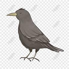 31 Gambar Kartun Burung Gagak Gambar Kartun Mu