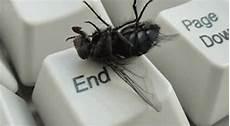 chasser les mouches 13 astuces naturelles pour chasser les mouches d 233 finitivement astuces maison how to plan