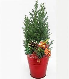 Mini Weihnachtsbaum Im Zink 220 Bertopf Baldur Garten