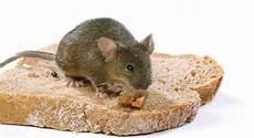 K 246 Der Gegen Die Maus Im Haus Industrieverband Agrar