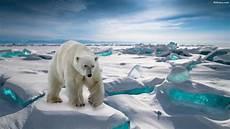 polar backgrounds polar wallpapers hd backgrounds images pics photos