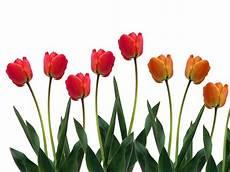40 Gambar Bunga Cantik Indah Bagus Comel Foto