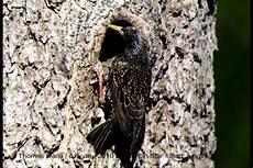 welcher vogel baut welches nest ein vogel f 252 ttert seine jungen im nest