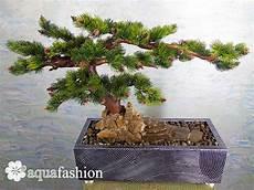 bonsai baum berlin quot bonsai 10 quot tischbrunnen mit sch 246 nen baum