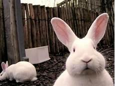 louie s lair learn from bunnies