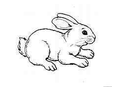 animal coloring page for toddlers 17335 printable coloring pages animal rabbit free printable coloring pages for free