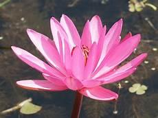 christine bailey lotus hd