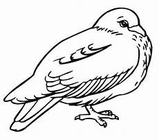 free printable pigeon coloring pages for