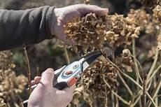 schneiden frühling bauern hortensie garten hortensie pflanzen pflegen und