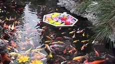 bassin de jardin avec cascade 62005 visit to a buddhist temple koi fish pond in china