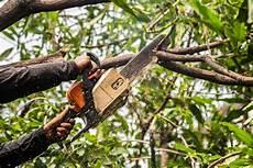 devis elagage arbre tarifs et prestations d 233 lagage d arbre exemple de devis