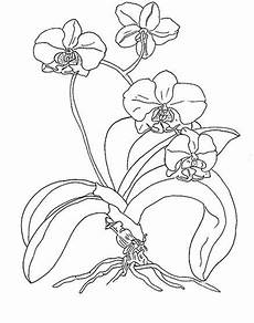 Window Color Malvorlagen Orchideen Designs Floral For Painting Works Orchidea Disegno