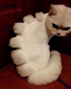 are you a cat person you can t miss these cat haircuts