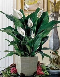 bl 252 hende zimmerpflanzen mit mehr oder wenig bedarf an licht