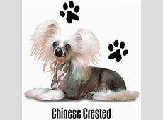 chinese naakthond t shirt 03 chineese naakthond kleding